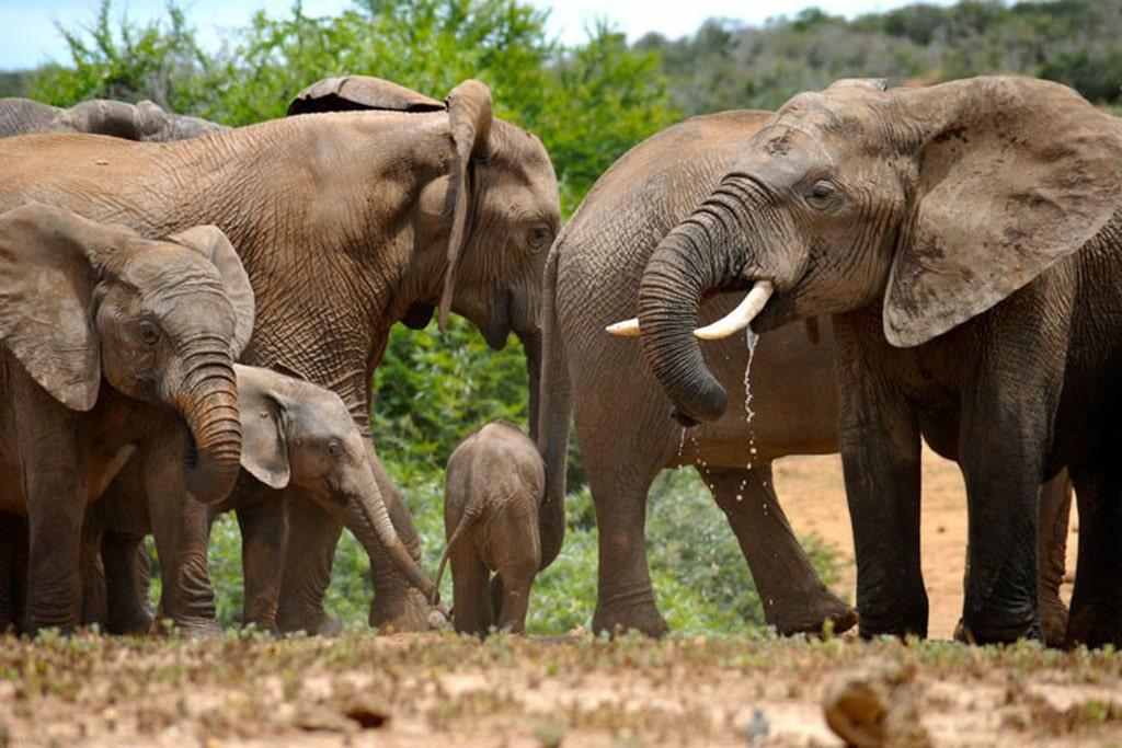 Swaziland - elefanter