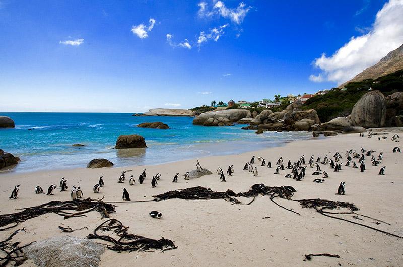 Cape point - penguins